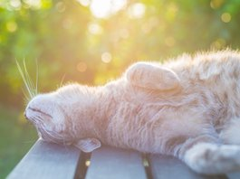 91361ba940-Bigstock-Cat Lying On Bench In Backlight At Sunset